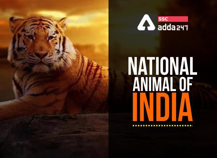 National Animal of India: Royal Bengal Tiger_40.1
