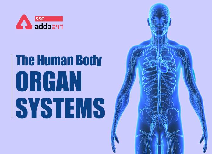 मानव शरीर और उसके अंग : यहाँ देखें मानव शरीर के अंग और इसके कार्य की विस्तृत जानकारी_40.1