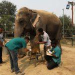 India's First Elephant Hospital Opens In Mathura