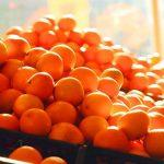2nd World Orange Festival Begins In Nagpur