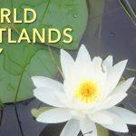 World Wetlands Day: February 2