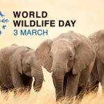 World Wildlife Day: March 3