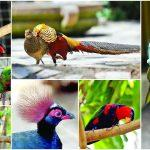 India's First Foreign Interactive Bird Park Launched In Mumbai