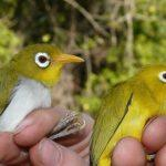 Two New Bird Species Found In Indonesia