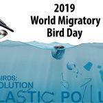 World Migratory Bird Day: 11 May