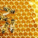 Beekeeping Development Committee Report