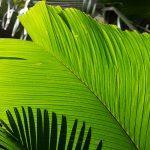 International Day of the Tropics : 29 June
