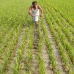 Govt hikes MSP of Kharif crops for 2019-20 season