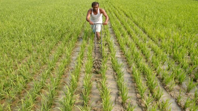 Govt hikes MSP of Kharif crops for 2019-20 season_40.1