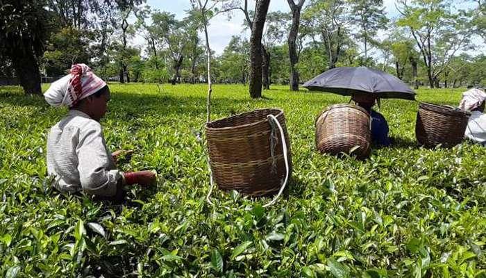 316 tourist spots to be developed by Assam Govt_40.1