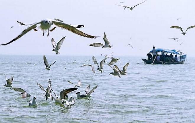 "Odisha approves conservation plan of lakes ""Chilika and Ansupa""_40.1"