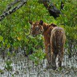 Discovery, WWF tie up to preserve Sundarbans