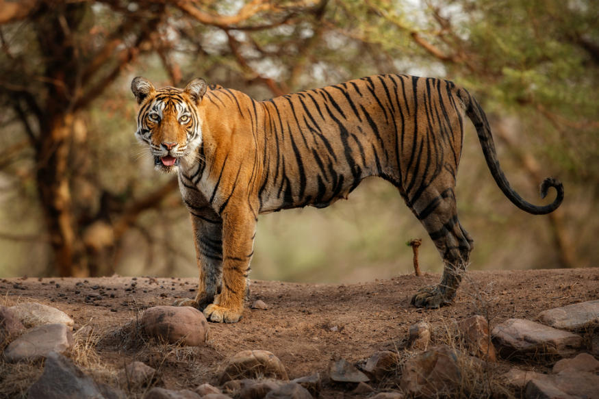 Chattisgarh declares Guru Ghasidas National Park as tiger reserve_40.1