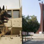 India's 1st war memorial for animals set to open in Meerut