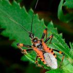 World Chagas Disease Day observed globally on 14 April