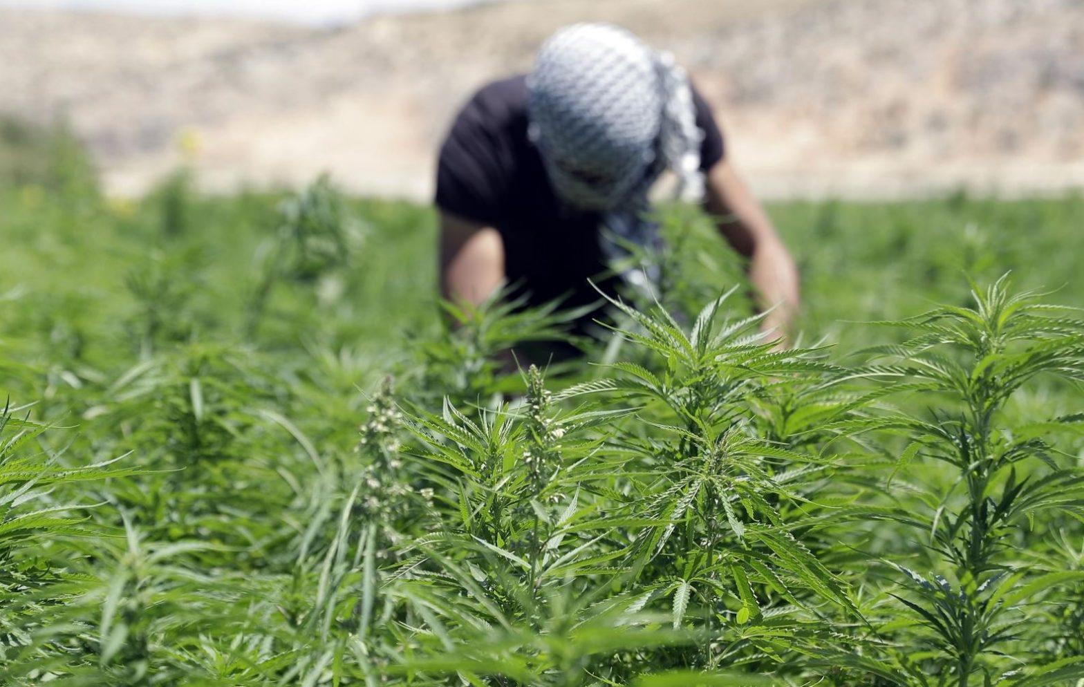 Lebanon legalizes cannabis farming for medicinal use_40.1
