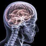 "JNCASR scientists develops ""Berberine"" based Alzheimer inhibitor"