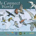 World Migratory Bird Day observed globally on 9 May