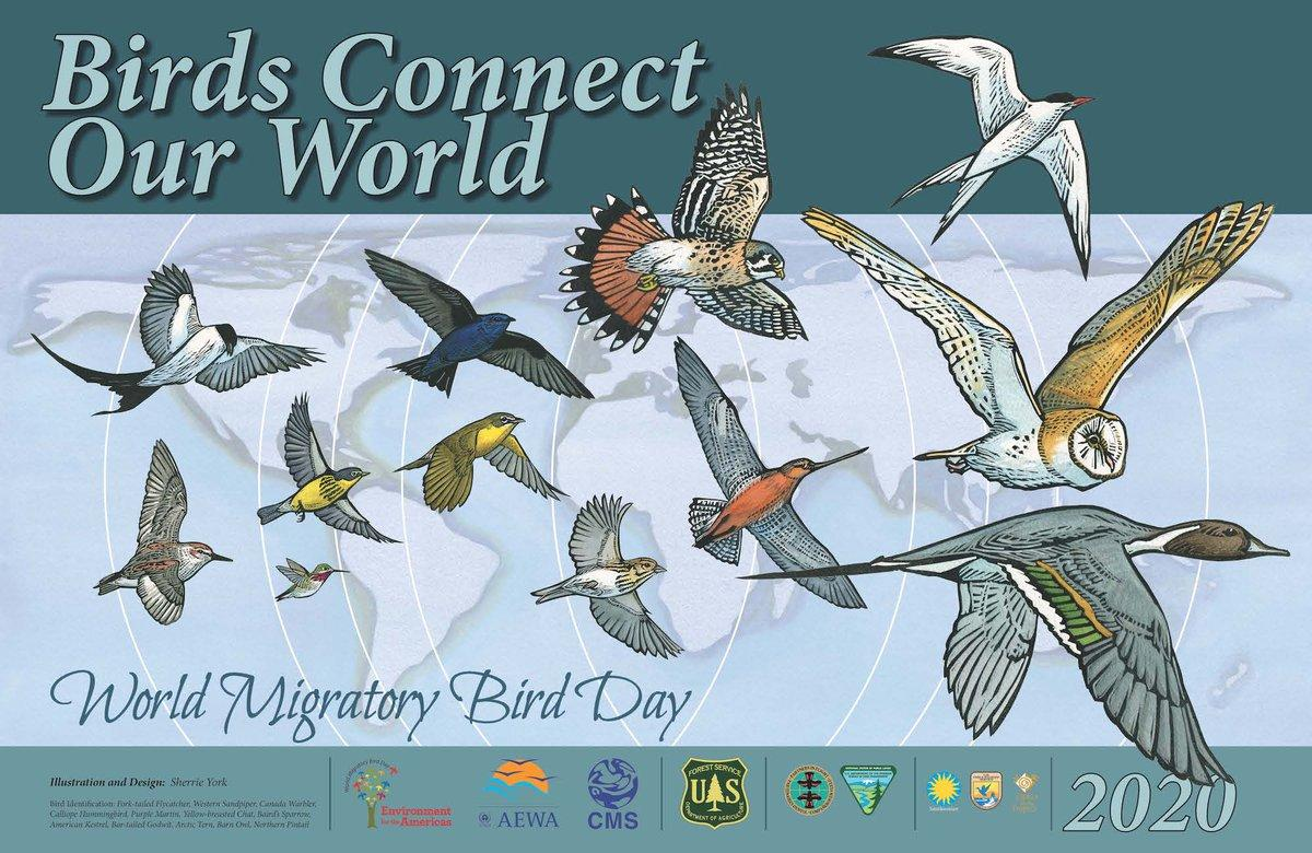 World Migratory Bird Day observed globally on 9 May_40.1