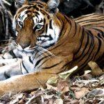 International Day for Biological Diversity celebrated on 22 May