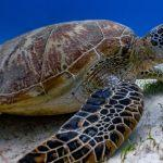 World Turtle Day celebrated on 23 May