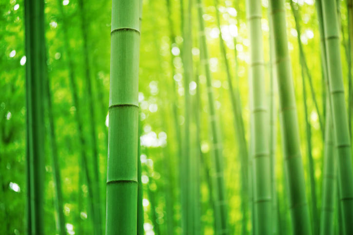 GoI increases customs duty on bamboo from 10% to 25%_40.1
