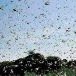 India becomes 1st country to control locusts through drones
