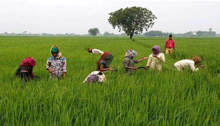Odisha Govt launches 'Balaram Yojana' to provide crop loan_40.1