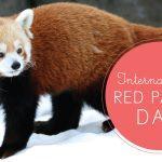 International Red Panda Day 2020