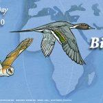 World Migratory Bird Day: 10 October