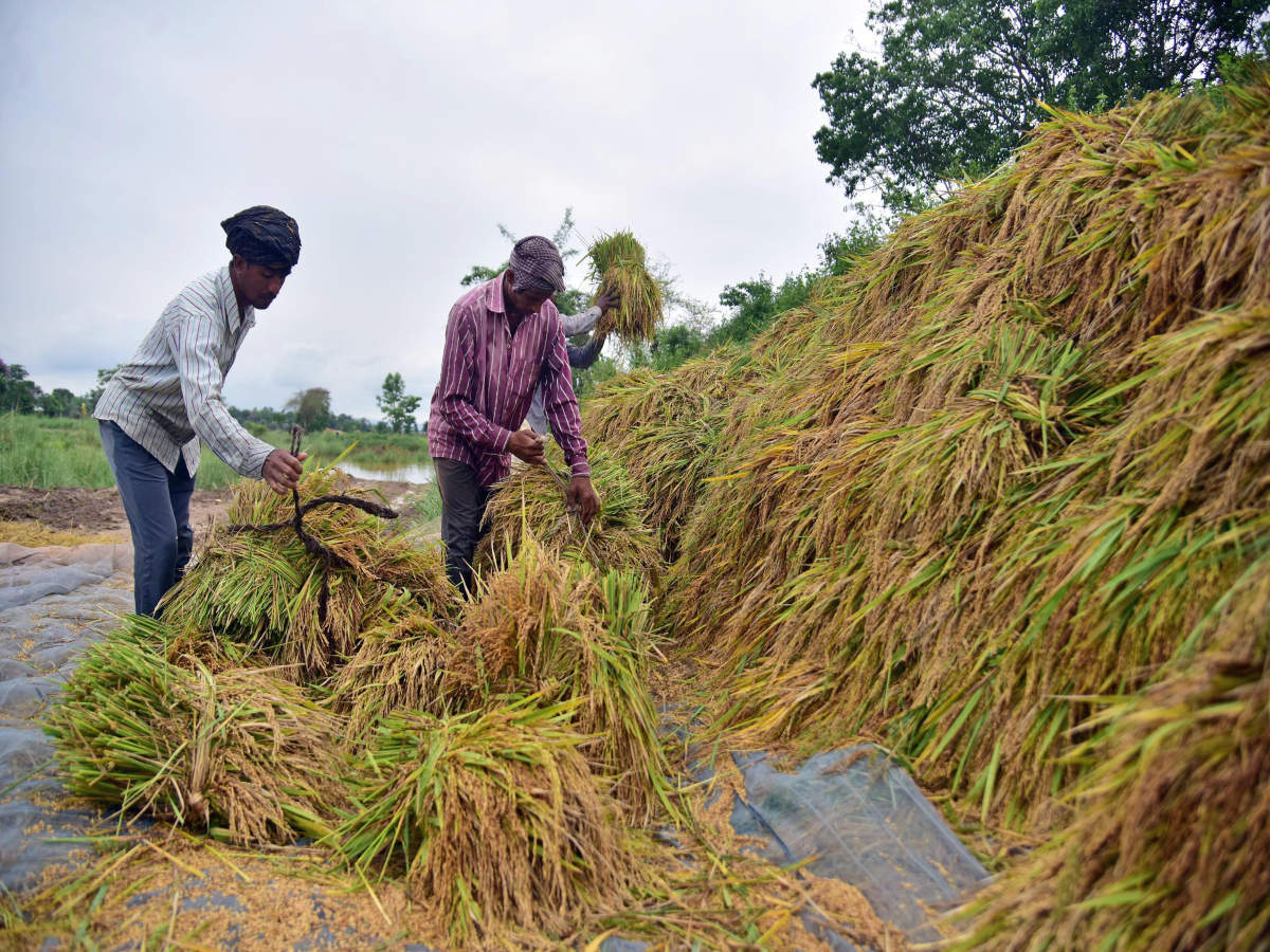 Goa Govt ties up with India Post to get farmers enrolled in PM-KISAN scheme_40.1
