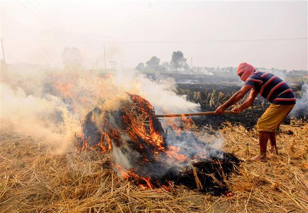 SC appoints former judge to monitor steps to prevent stubble burning_40.1