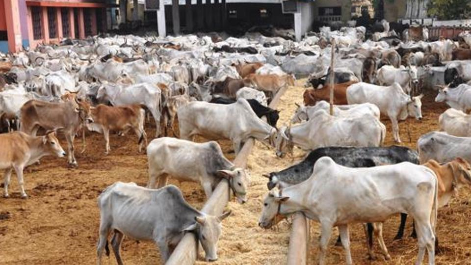 IIT Madras startup launches 'mooPay' for dairy farmers in Rajasthan_40.1