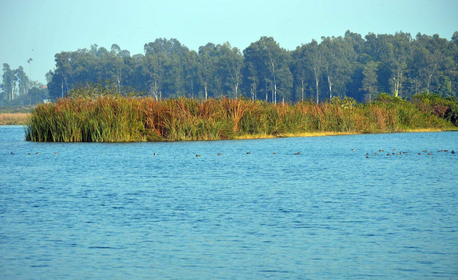 Asan Conservation Reserve becomes Uttarakhand's 1st Ramsar site_40.1