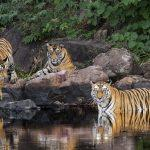 UNESCO allots India's Panna Tiger Reserve 'Biosphere Reserve' status