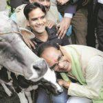 Madhya Pradesh govt announces 'Gau Cabinet' for protection of cows