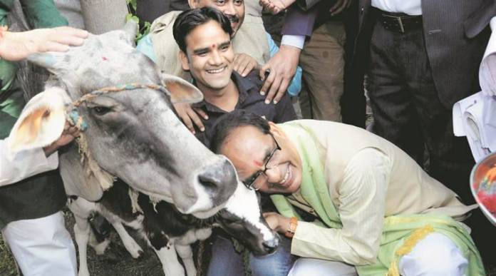 Madhya Pradesh govt announces 'Gau Cabinet' for protection of cows_40.1