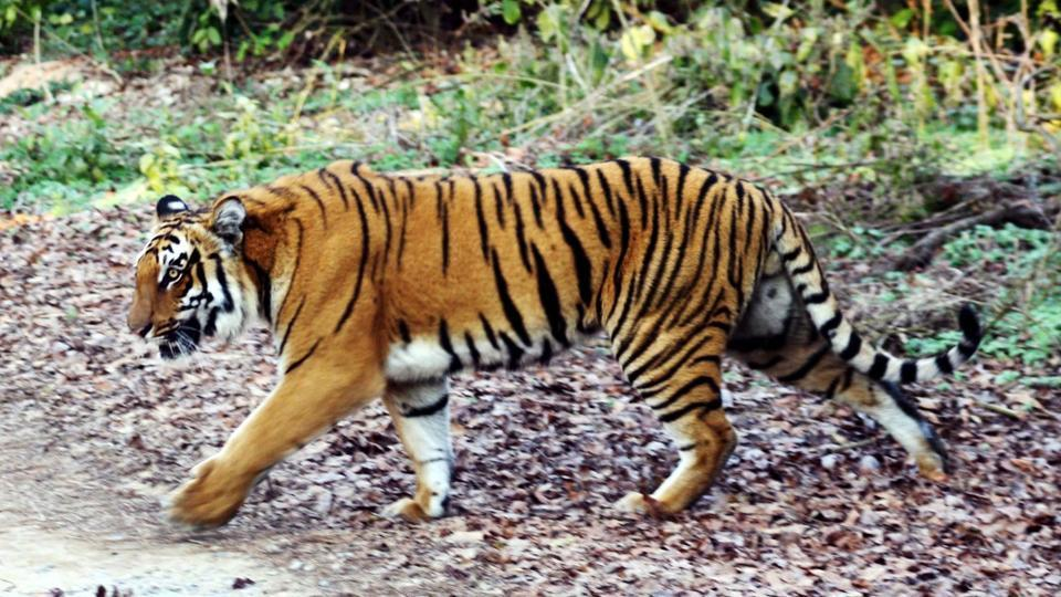 Tamil Nadu set to create state's 5th tiger reserve_40.1
