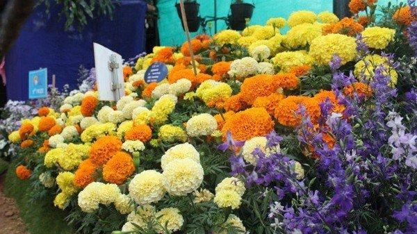 Karnataka to set up a Flower Processing Centre_40.1