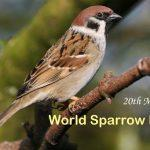 World Sparrow Day: 20 March