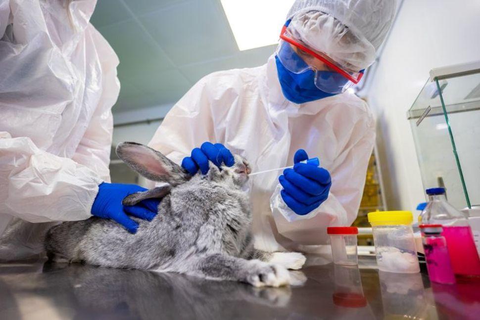 Russia registers world's 1st Covid vaccine Carnivac-Cov for animals_40.1