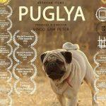 Marathi film Puglya wins Best Foreign Feature at Moscow Film Fest