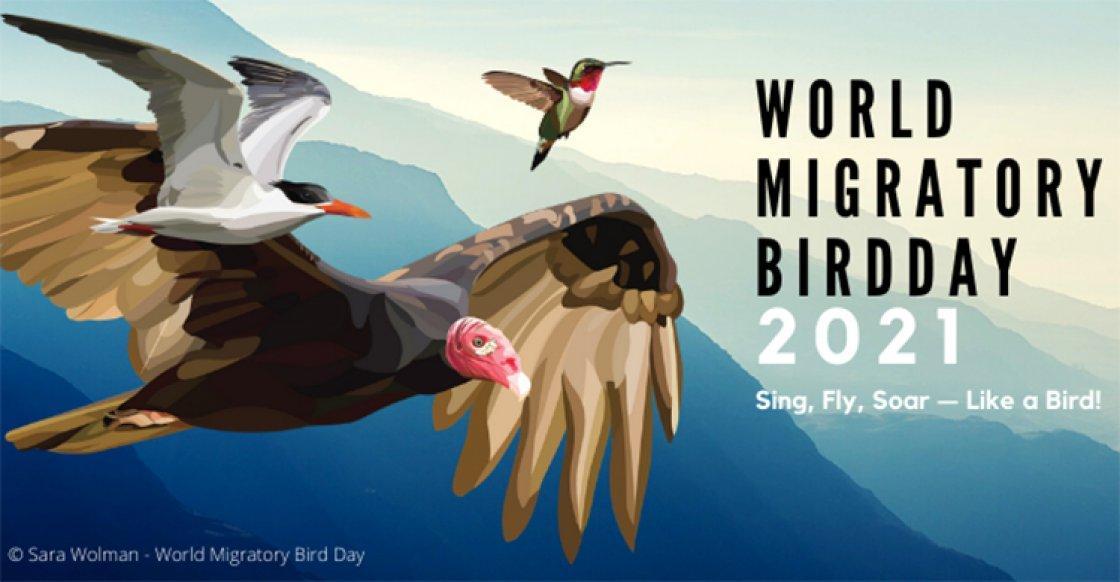 World Migratory Bird Day: 08 May_40.1