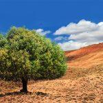 International Day of Argania: 10 May