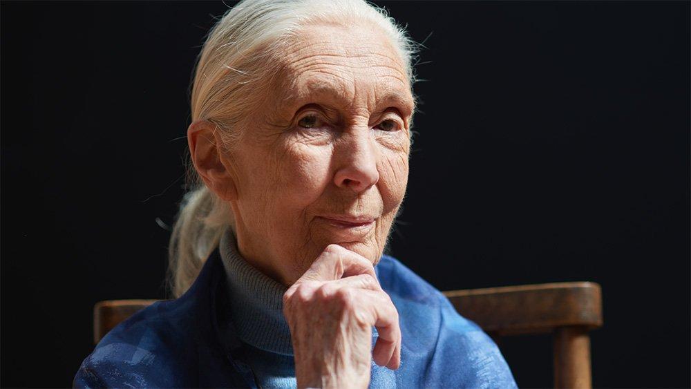 Naturalist Jane Goodall wins 2021 Templeton prize for life's work | প্রকৃতিবিদ জেন গুডল তাঁর কাজের জন্য 2021 টেমপ্লেটন পুরস্কার পেয়েছেন_40.1