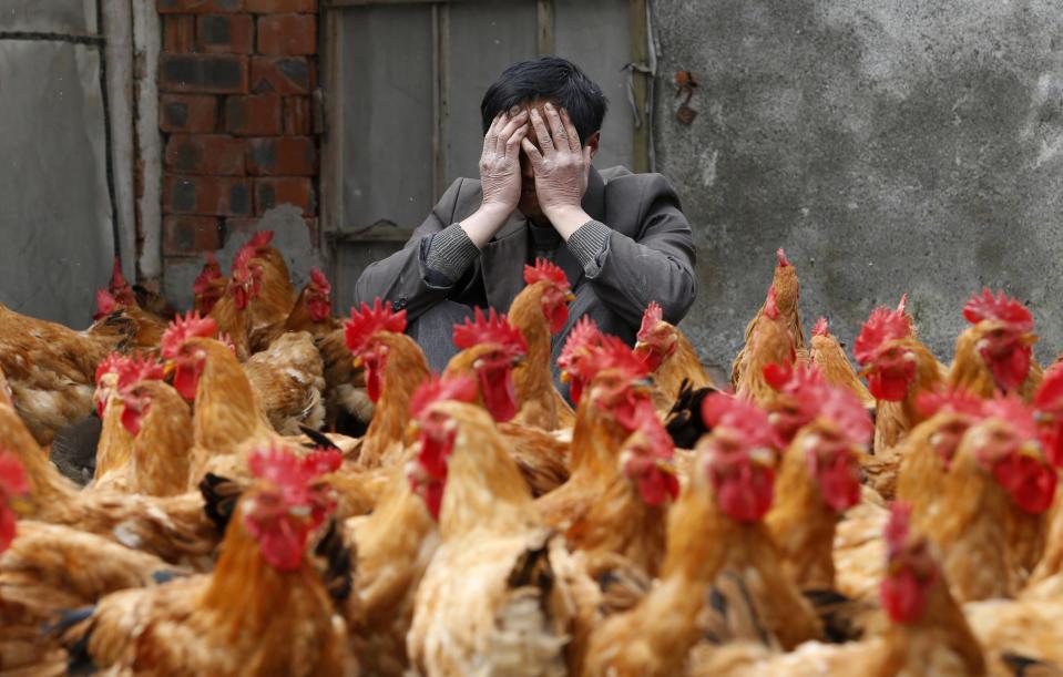China reports first human case of H10N3 bird flu_40.1