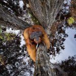 Thomas Vijayan Wins Nature TTL Photographer of the Year 2021