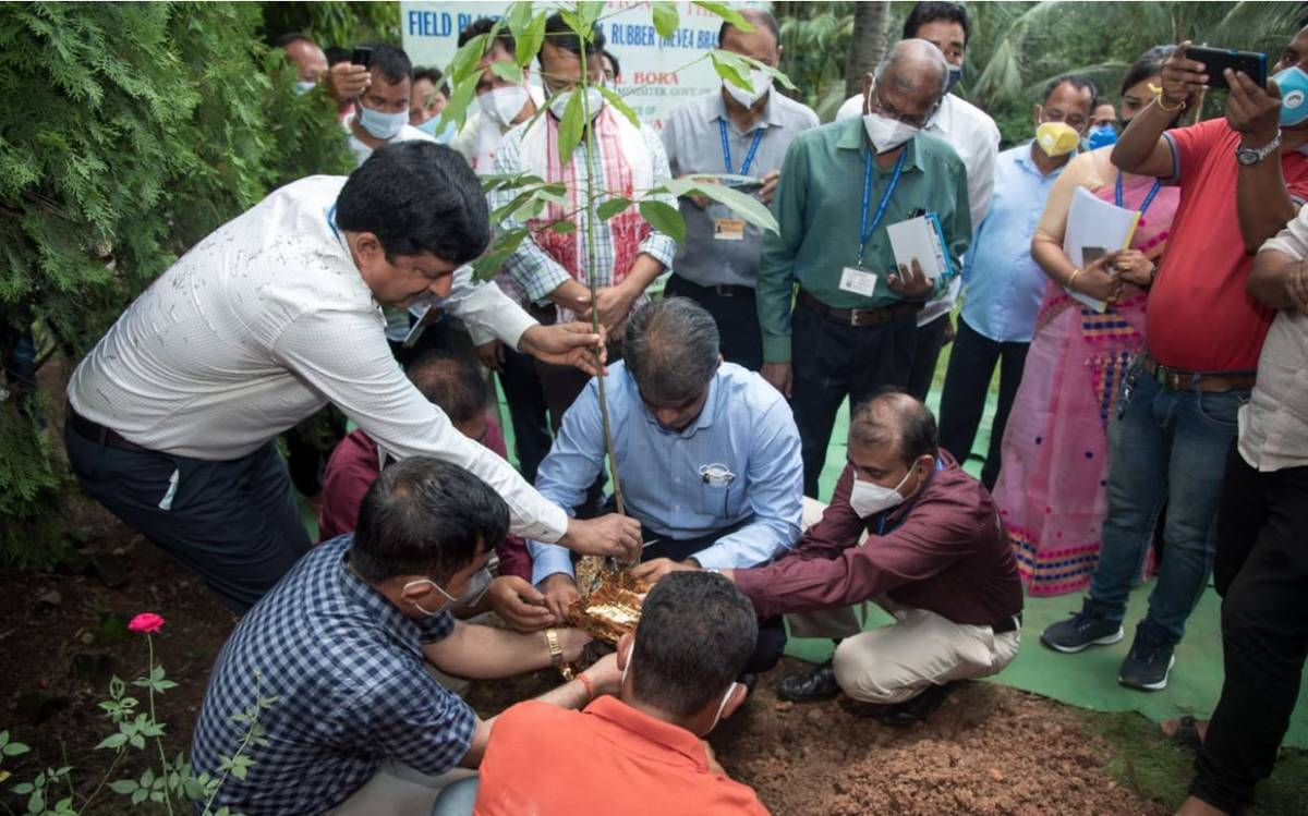 World's first-ever genetically modified rubber planted in Assam_40.1