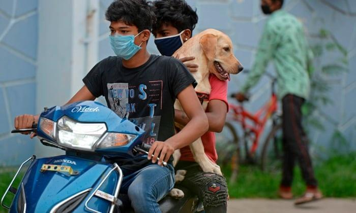 Goa becomes first state to go rabies free |_40.1