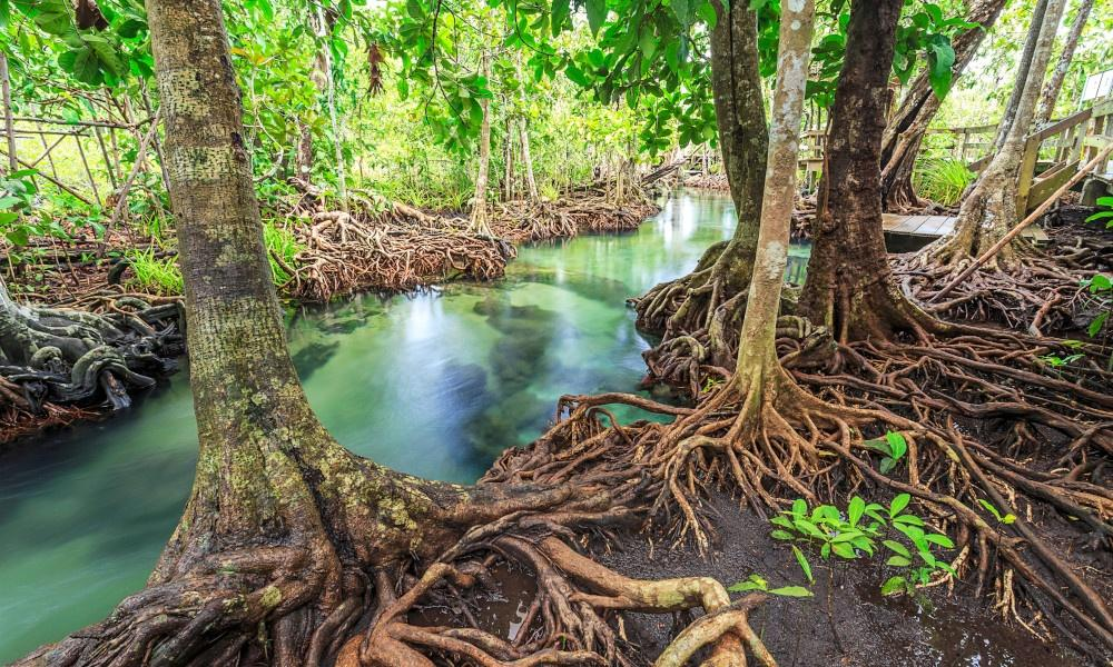 International Day for the Conservation of the Mangrove Ecosystem_40.1